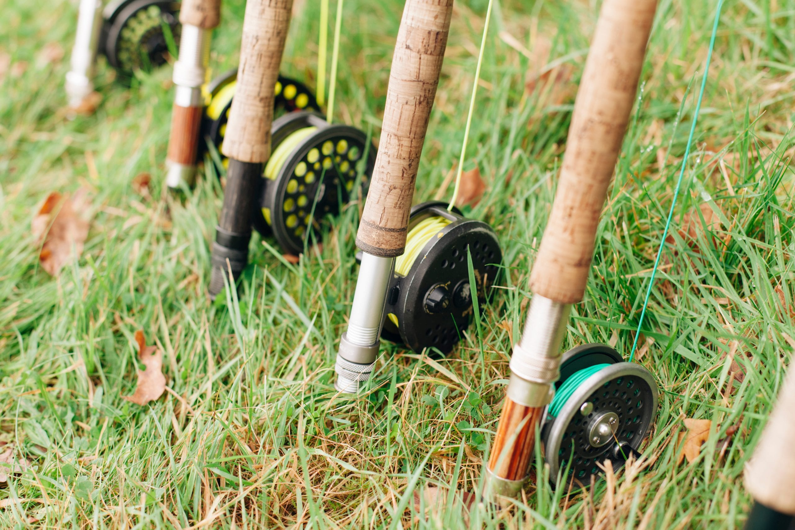 Fishing Rods Lined Up In A Row